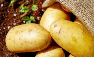 фото картофель